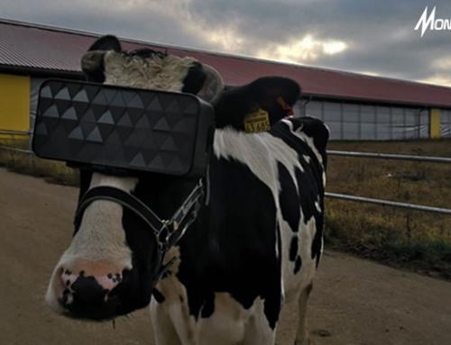 Virtual Reality Membantu Peternak dalam Meningkatkan Kualitas Susu Sapi Perah