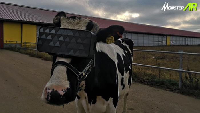 headseat vr,manfaat vr,peternakan sapi perah,susu sapi perah,teknologi VR,virtual reality,VR di peternakan,